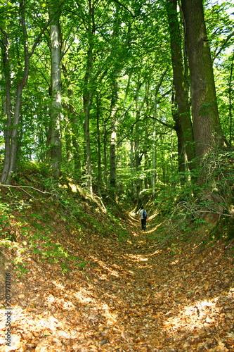 Aluminium Weg in bos Turysta idący przez leśny wąwóz