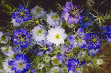 blue cornflower background