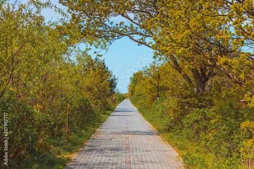 Nature concept, sidewalk in green park