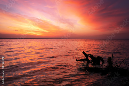 Fotobehang Koraal Beautiful spring landscape with sea coast, colorful sunset sky and log or snag.