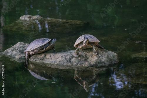 Aluminium Schildpad Tortoises by the river