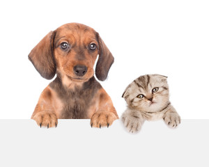dachshund puppy and cute kitten peeking above empty white board. isolated on white background. Space for text © Ermolaev Alexandr