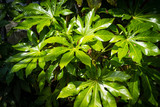 Exotic, green plants, natural background - 208003339