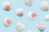 White seashells on blue background.  - 208050775