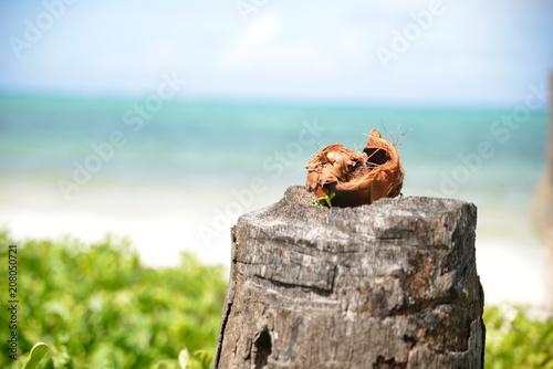 Aluminium Zanzibar Kokosnuss am Strand von Zanzibar