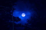 Full moon and tree silhouette. Photo from Sotkamo, Finland.