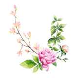 Watercolor vector hand painting illustration of peony flowers and green leaves. - 208068164