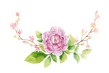 Watercolor vector hand painting illustration of peony flowers and green leaves. - 208068391