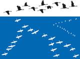 Oiseaux - Vols de migrateurs - 208101184