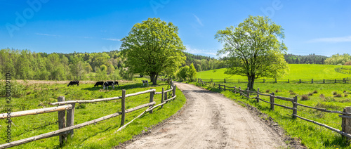 Leinwanddruck Bild Countryside landscape, farm field and grass with grazing cows on pasture in rural scenery with country road, panoramic view