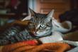 Face cat portrait