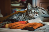 Tabby cat portrait - 208133178