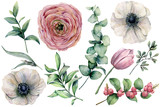 Watercolor flower set with eucalyptus leaves. Hand painted anemone, ranunculus, tulip, berries and branch isolated on white background. Natural illustration for design, print, fabric or background. - 208135508