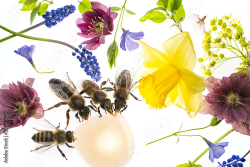 Fotobehang Bee spring flowers and bees drinking nectar