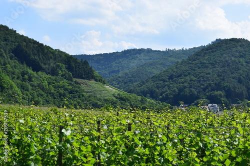 Canvas Blauwe hemel breites Tal mit Weinbergen, Ahr