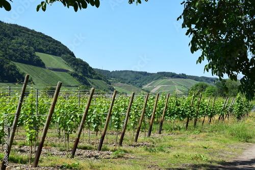 Fotobehang Landschappen Weinbau