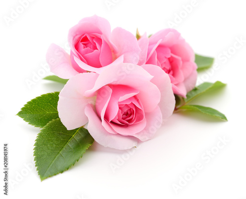 Beautiful pink roses. - 208145974