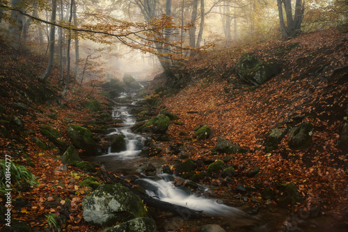 Fotobehang Diepbruine Landscape of a river flow in the mountain forest in autumn.