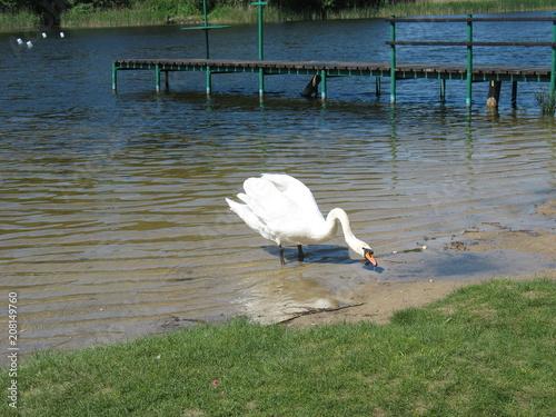 Aluminium Zwaan Лебедь на озере