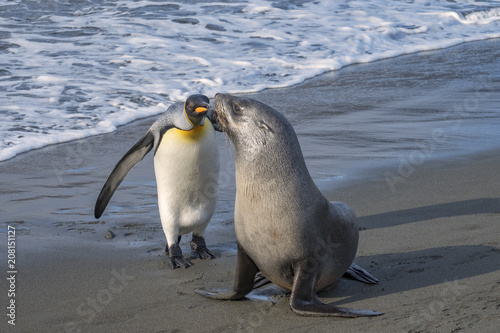 Fotobehang Antarctica King Penguin and Fur Seal Encounter, South Georgia Island, Antarctic