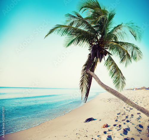Tropical beach with coconut tree and clean sea