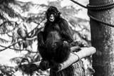 Scared monkey - 208181718