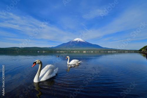 Aluminium Nachtblauw 富士山バックに仲良し白鳥家族