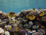 Photo of a tropical Fish on a coral reef - 208191714