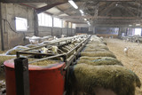 Herd of sheeps in sheep fold - 208197749
