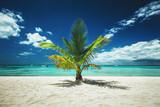 Palm tree and tropical island beach