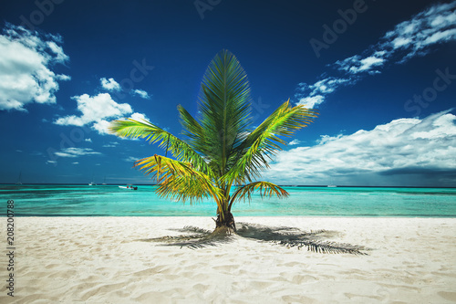 Palm tree and tropical island beach