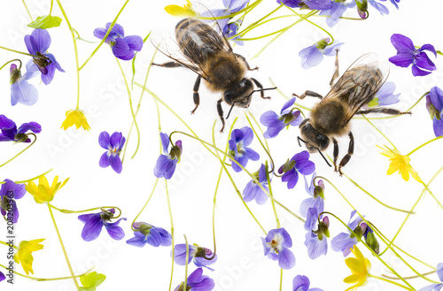 Fotobehang Bee spring flowers - floral pattern with bees - isolated on a white background