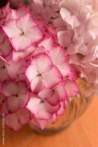 Fotobehang Hydrangea 花瓶に飾った美しいアジサイの花