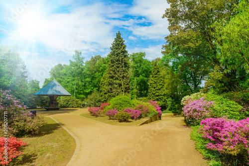 Aluminium Azalea Beautiful garden in spring