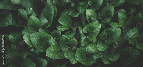 Sticker leaves background texture. green leaf