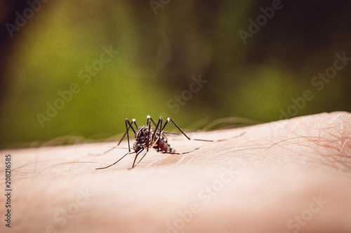 macro shot of a mosquito on a man's arm - 208216585