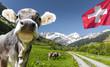 Leinwandbild Motiv Kuh in der schweiz