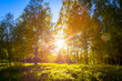 The sun shines through the woods. Photo from Sotkamo, Finland.