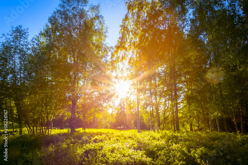 Fototapeta The sun shines through the woods. Photo from Sotkamo, Finland.
