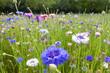 Leinwanddruck Bild - sfondo fiori colorati prato