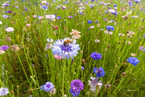 Leinwanddruck Bild fiori selvatici colorati fiordalisi viola sfondo
