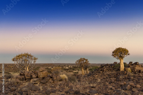 Fotobehang Diepbruine Quivertree Forest, Namibia
