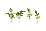 Fresh organic parsley leaves on white background; flat lay - 208236308