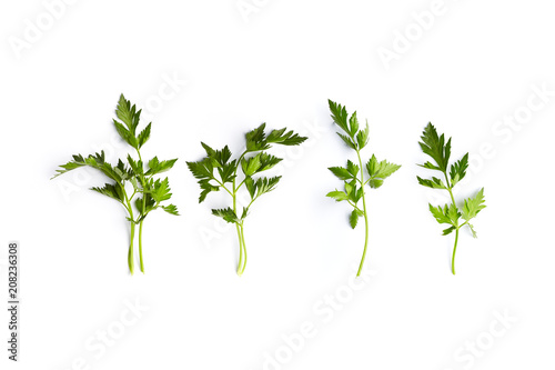 Fresh organic parsley leaves on white background; flat lay
