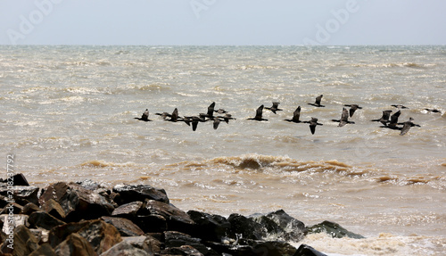 cormorants flying over sea surface