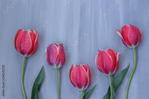 Foto Murales bright red tulips on grey wooden background
