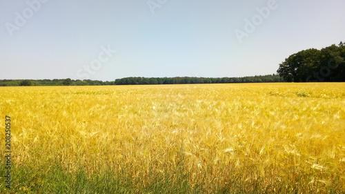 Fotobehang Oranje Feld 1