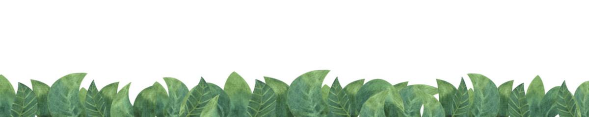 Green leaaves on white isolated Background. Concept. Collage © kozhevnikofa