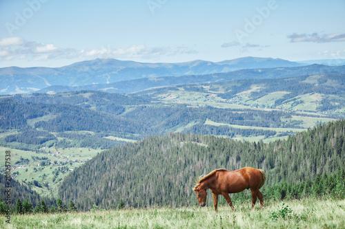 Fotobehang Paarden Red horse with long mane in flower field against sky