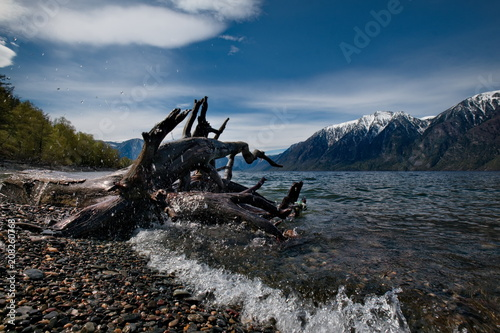 Fotobehang Schip Russia. The South Of Western Siberia. Mountain Altai. Late spring on the shore of lake Teletskoye.